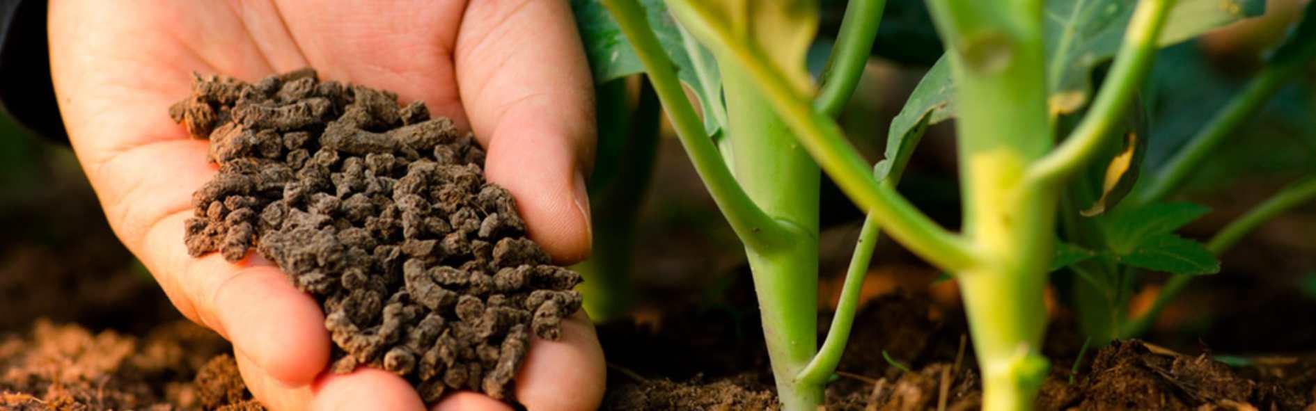 Conoce los abonos para plantas que hay y cuándo utilizarlos