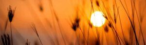 El huerto solar es una buena opción para combatir el cambio climático e implementar nuevas formas de producir energía renovable
