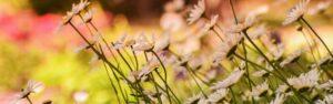 Descubre el jardín inteligente y sus ventajas
